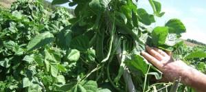 Los agricultores de Alpujarra de la Sierra se quejan de los abusivos precios de los productos que llegan al consumidor final