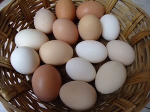 Se producen huevos ecológicos en Mecina Bombarón