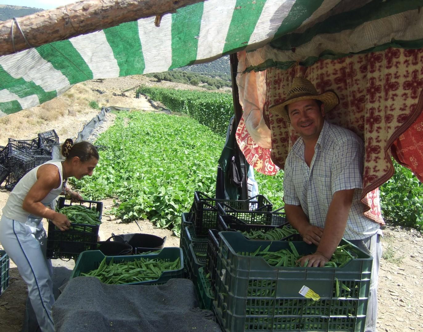 La Jornada de la Habichuela de Alpujarra de la Sierra crece en su tercera edición en interés científico y gastronómico