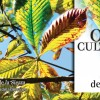 Otoño cultural 2014