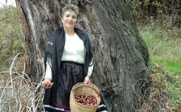 Los Castaños Milenarios de Alpujarra De La Sierra