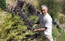 Un vecino de La Alpujarra recupera una huerta morisca para mostrar productos históricos