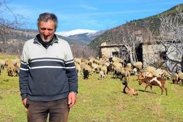 Pastor de ovejas y cosechador de habichuelas verdes en la sierra de Mecina Bombarón